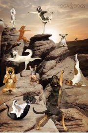 Joga - Zabawne Figury w Kanionie - Psy - plakat