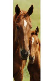 Konie - plakat