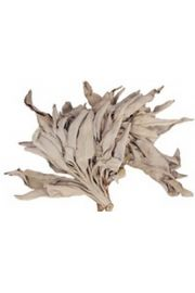 Bia�a sza�wia - susz - opakowanie 100 gram