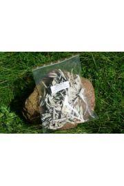 Biała szałwia - susz - opakowanie 50 gram