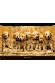 Keith Kimberlin - Złote Psy Goldeny - plakat