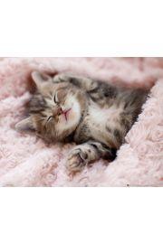 Śpiący Kotek - plakat