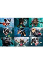 Nurkujące Psy - plakat