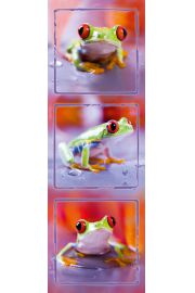 Trzy Żabki - plakat
