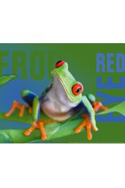 Zielona Żaba - plakat