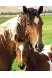 Konie - Klacz i Źrebię - plakat
