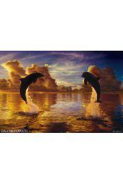 Lassen - Niebiańska Harmonia - Delfiny - plakat