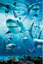 Polujące Rekiny - plakat