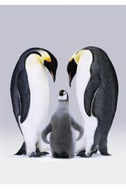 Pingwiny Cesarskie - plakat