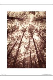 Tree Tops Sepia - art print