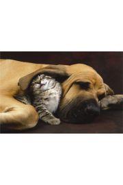 Pies z Kotkiem - plakat