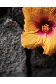 Kwiat wśród kamieni - plakat