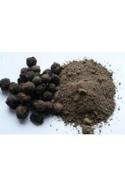 Shuganda Kokila (Cinnamomum glaucescents)
