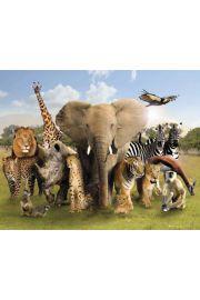 Dziki Świat - Zwierzęta Afryki i Azji - plakat