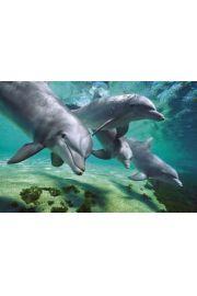 Nurkujące Delfiny - plakat