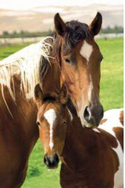 Konie - Klacz i Źrebak - plakat
