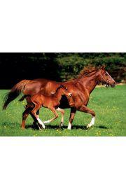 Klacz i Źrebak - Konie - plakat