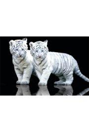 Białe Tygryski - plakat