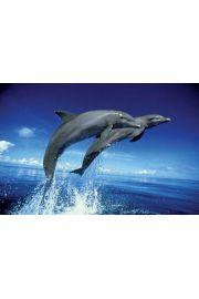 Wesołe Delfiny - plakat