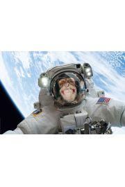 Małpa w Kosmosie - plakat