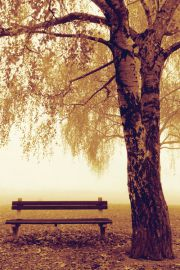 Park Bench - Jesień - Ławka w parku - plakat