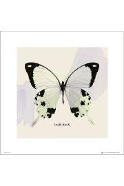 Motyl - art print