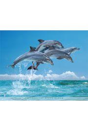 Delfiny - plakat