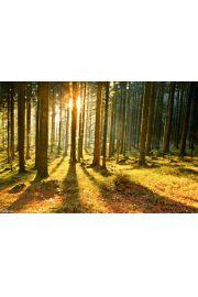 Las Promienie Słoneczne - plakat