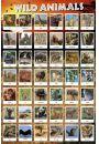 Dziki Świat Zwierząt - plakat - Plakaty. Ptaki