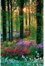 Le�ne Kwiaty - Flower Forest - plakat - Lasy i parki