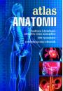 Atlas anatomii - Kobieta w ciąży