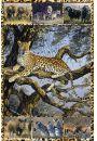 Zwierzęta Afryki - plakat - Plakaty. Inne zwierzęta