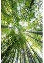Las Bambusowy - plakat - Lasy i parki
