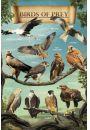 Drapie�ne Ptaki Orze� Jastrz�b Sok� ... - plakat