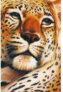 Gepard - Leopard - plakat - Koty