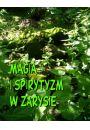 Magia i spirytyzm w zarysie - Religia Religioznawstwo Teologia
