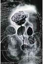 Srebrna Róża - plakat - Plakaty. Kwiaty